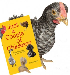 Cuckoo Maran Chicks with the book